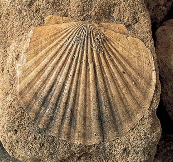 q son los fosiles yahoo dating