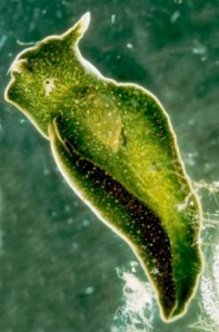 animal-planta