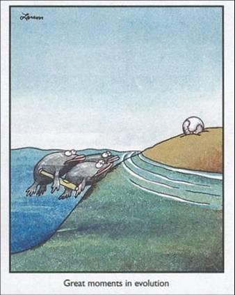 fish-beisbol1