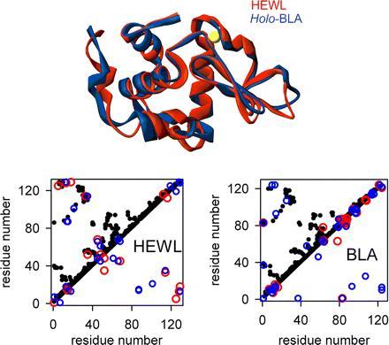 protein-folding