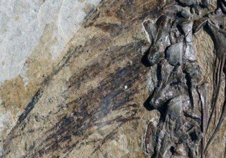 dinopluma