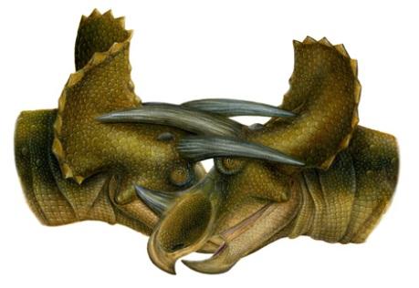 tricerators