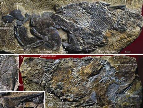 fosil-pez