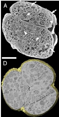fosiles-bacterias1