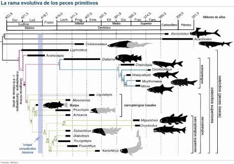 taxonomia-peces