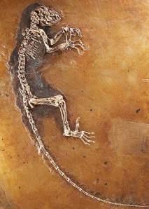 humano antiguo