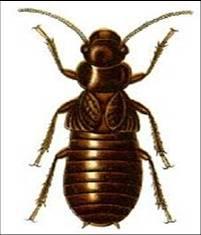 termita4