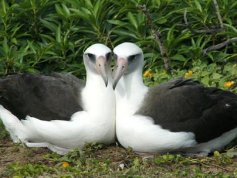 http://oldearth.files.wordpress.com/2009/06/albatros.jpg?resize=470%2C352