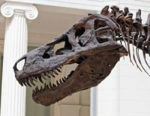 Los agujeros de la mandíbula del <i>T. rex</i> podrían indicar la causa de su muerte
